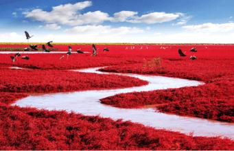 世界风情 中国的盘锦红海滩