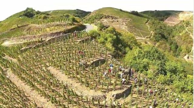 葡萄酒 科特-罗第 cote-rotie 产区