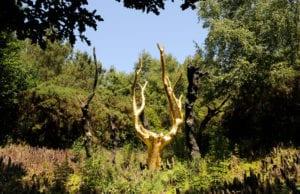 法国 布列塔尼 布劳赛良德(Brocéliande)森林 亚瑟王