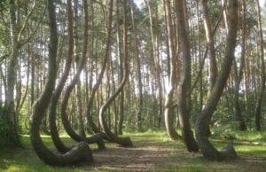 波兰 歪森林