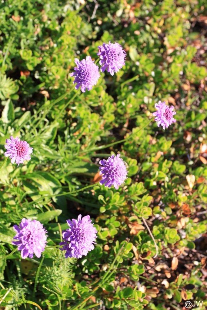 美丽的小花朵。