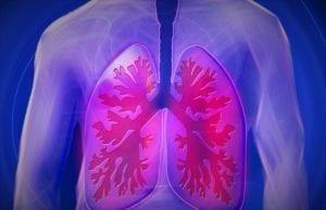 肺(pixabay)