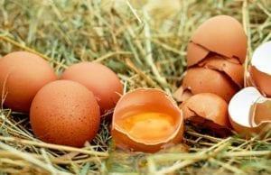 鸡蛋(pixabay)