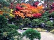 金秋,浓艳欲滴的树叶,再怎么动人心弦,也不可摘一片 (图片:歐洲希望之聲)