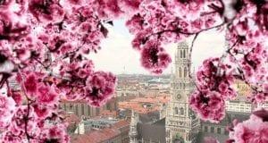 德国樱花,意为和平,装点城市,美如仙境!