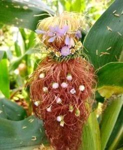 把玉米须编织成各种新娘发型,渐层发色配上花朵点缀,乍看之下还以为户外发型秀呢(图片来源:爆废公社版權歸屬原作者)