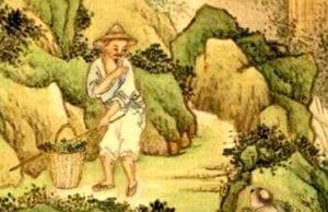 端午采药是古人的习俗(維基百科)