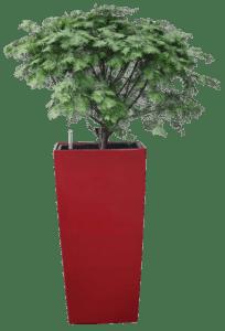 沈阳市一有钱人开着轿车多次到公园里偷名贵树种——红豆杉栽种到自家院子里