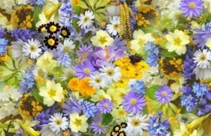我的前身是一朵花(图片:pixabay)