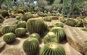 沙漠植物园 (图片:PxHere)