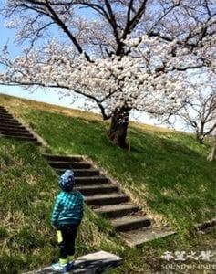 """喜欢花见(日文称赏樱为""""花见"""",这是日本人的习俗)(圖片来源:欧洲希望之声)"""