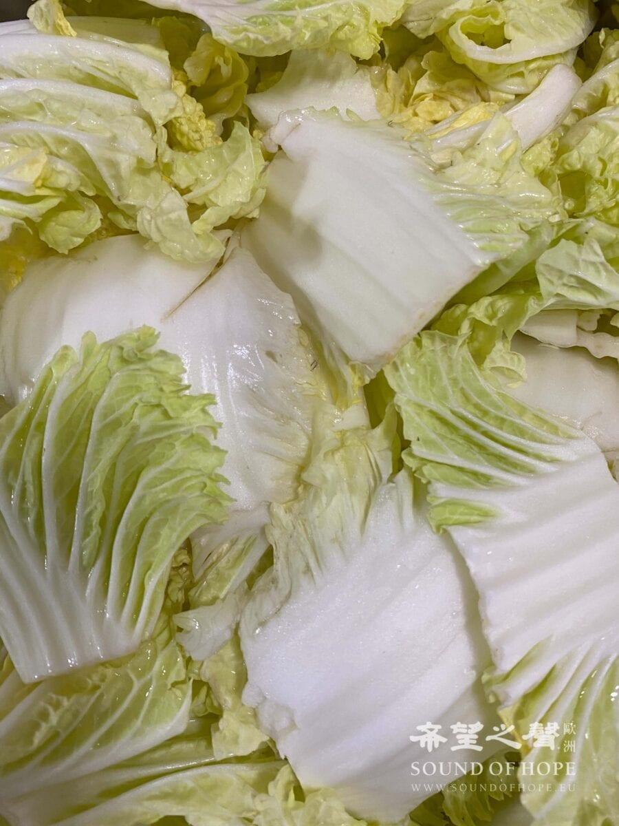 大白菜每片洗净切段,用过滤水加粗盐。(图片来源:欧洲希望之声 麦克)