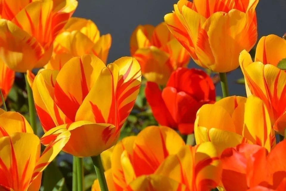 英国 英国解封 赏花 英国公园 维多利亚公园 野花