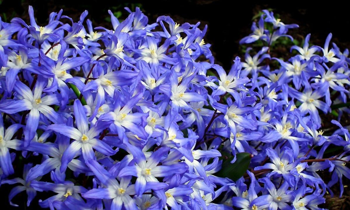 花卉 居家花园 春天